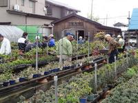 2013年4月21日日帰り盆栽園巡り 1 (6).JPG