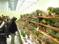 2012第37回雅風展湘風園売店 (2).JPG